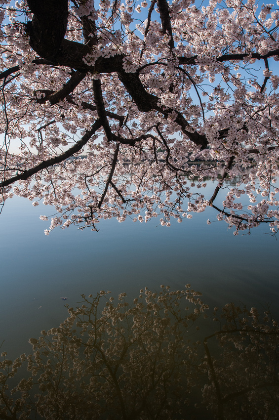 cherryblossoms-dc-2014-portraitstoryimages-4068